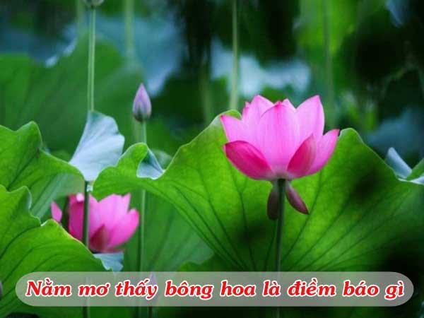 Mơ thấy bông hoa đánh số mấy