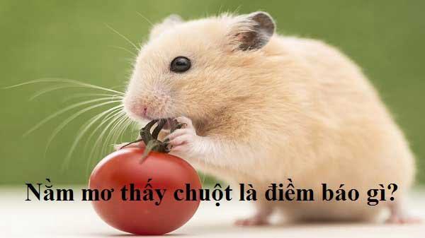 Mơ thấy chuột đánh con nào