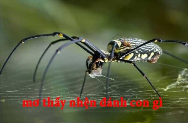 Mơ thấy nhện đánh số mấy