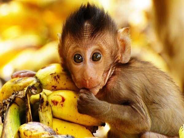 Mơ thấy con khỉ đánh con gì